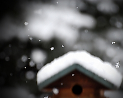 Birdhouse in Winter - Hooksett, NH
