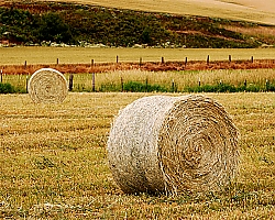 More hay bales - Idaho roadside