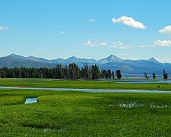 Marsh near Shoshone Lake in Yellowstone